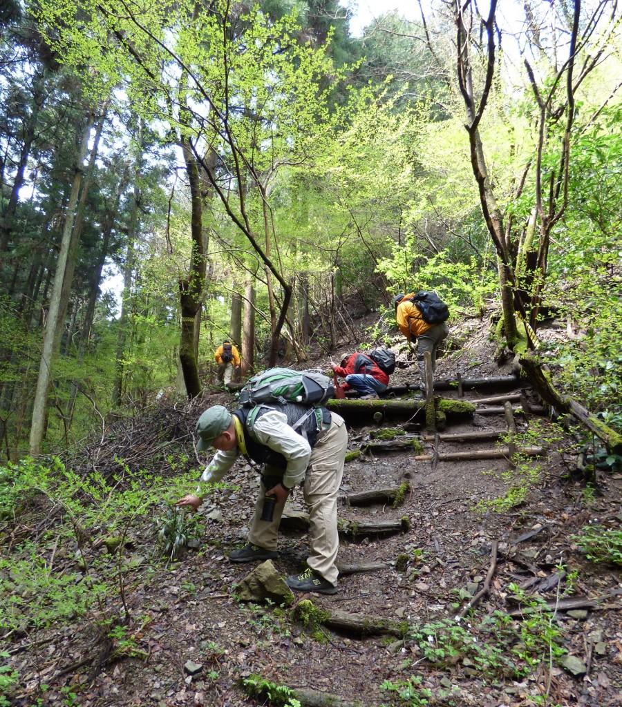 高尾日影沢では特定非営利活動法人 森と人のネットワークさんが森林保全活動の一貫で観察路の整備を行います。