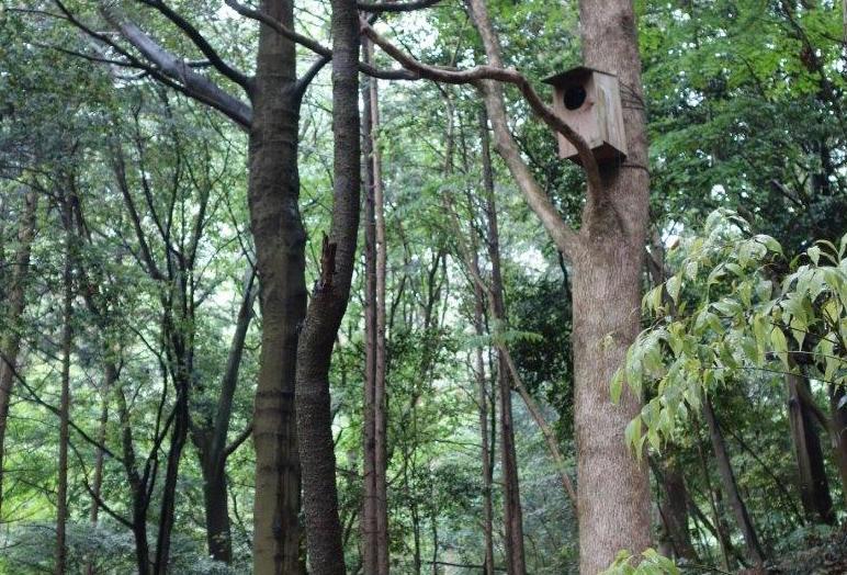 ソニーの森(幸田サイト)に設置されたフクロウの巣箱