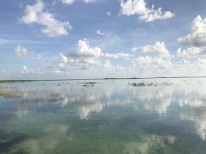 シアンカーンも含むユカタン半島は、非常に浅い表層土の下層に石灰岩の層がある関係で、地下水脈が発達して特殊な水環境となっている。海のように見えるこの場所も、実は淡水のラグーン。湿地帯に取り巻かれたラグーンが複数あり、海に向かって徐々に海水になっていく。