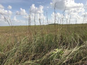 水路の周りは湿地帯になっており、特殊な植生が続く。一部のエリアには木道が整備されており、木道の上から湿地帯を観察できる。