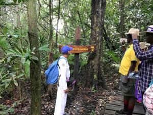 林内にも木道が整備されている。陸上・水上双方で経験豊富なガイドの方が学名付きで解説をしてくれた。