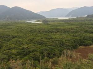 世界遺産候補地の一つ。奄美大島のマングローブ林